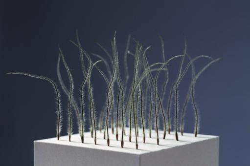 Andrea Mähner - Ordnung ist das halbe Leben - Papierkubus mit Hahnenfußsamen - 8cm x 8cm x 14cm - 2013