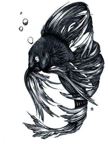 Corinna Naumann - Kampffisch | Tuschezeichnung | 23x30.5cm | 2014